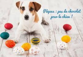 oeuf chiens
